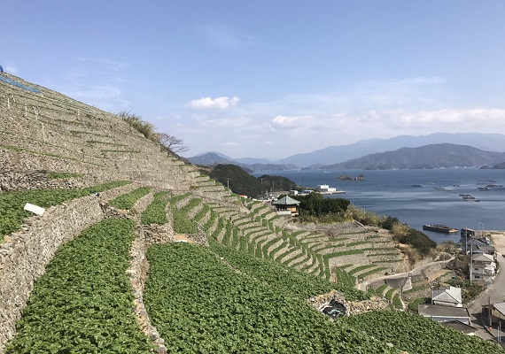 Terraced fields of Yusumizukaura