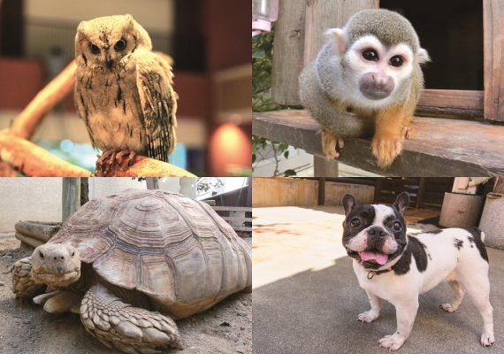 【Interactive zoo】Let's meet with cute animals