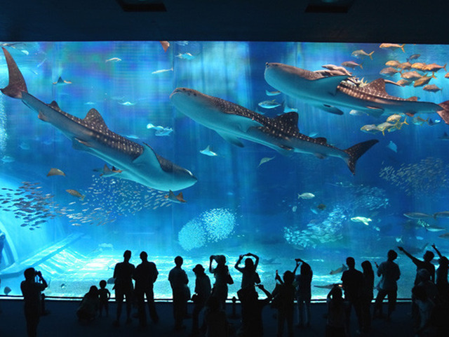 Attraction package with Okinawa Churaumi Aquarium ticket