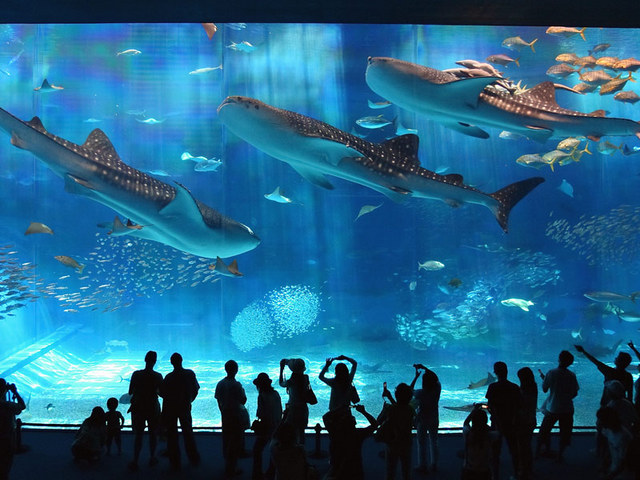 【Early reservation discount × Okinawa Churaumi】Early reservations made until 28 days prior ★ Ticket to the Aquarium included (breakfast included)