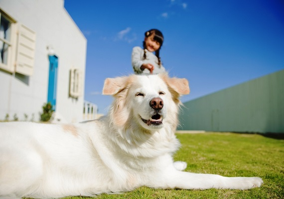 Hotels where you can have fun with pets and enjoy accommodation