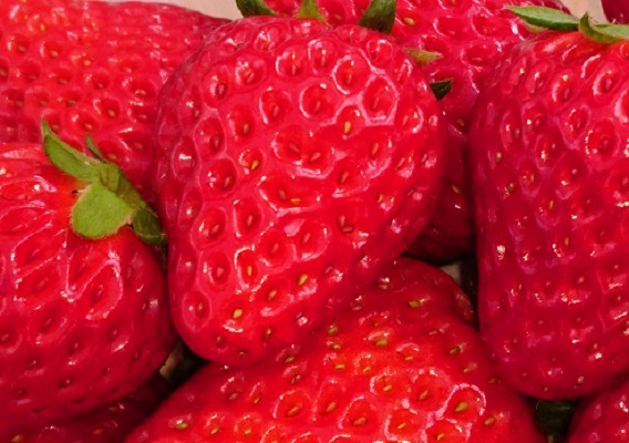 <CENTER>Now is the season!<CENTER>★Strawberry picking in Okayama★<CENTER>【Yunogo Hot Spring・Okutsu Hot Spring】<CENTER>
