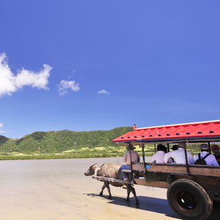 【MOST POPULAR!】Iriomote・Yubu・Taketomi – 3 Island Tour(Ride Water Buffalo Carriage at Taketomi Island & Bus Tour)