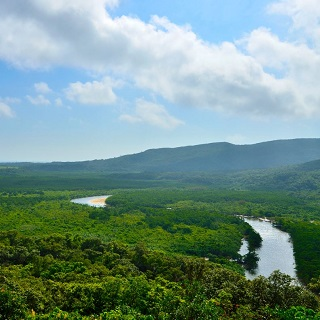 【Great Nature!Tour at Iriomote Island】Short Tour to Iriomote Nakama・Yubu Island <N-0>