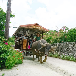 【Taketomi Island Tour!】 Taketomi Island Water Buffalo cart ride‧Glass bottom boat sightseeing tour<Ta-2>