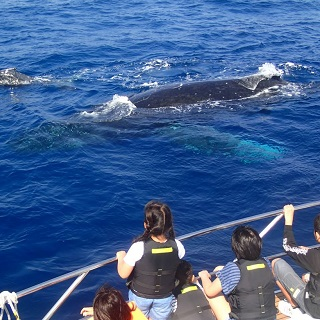 【From December 21 to March 31】【Naha departure/Half day/2 ferries】Whale-Watching Tour!!