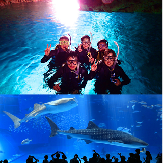 Okinawa Churaumi Aquarium entrance Ticket + Blue Cave Snorkeling Experience!!