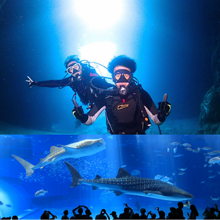 Okinawa Churaumi Aquarium entrance Ticket + Blue Cave Diving Experience!!