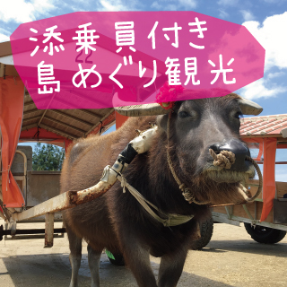 ☆Accompanied by a Tour Conductor☆ 3 Island Tour: Iriomote Island, Yubu Island, Taketomi Island Sightseeing Tour (Including a Water Buffalo carriage ride tour for Taketomi Island)