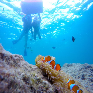 【Early Bird Discount 30 days!】 Participation from 6 years old is OK! Enjoy watching the best corals with this snorkeling tour