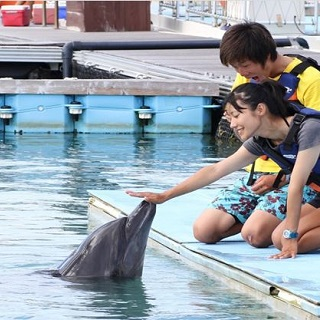 【Motobu Genki Village】Smile Dolphin + Photo included! Limited period: 1/11/2019 to 31/12/2019