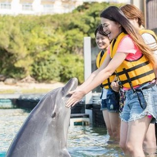 Dolphin Encounter at【Motobu Genki Village】