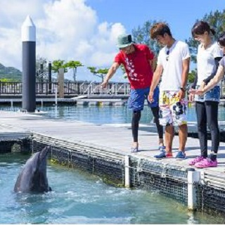 Dolphin Walking Tour at【Motobu Genki Village】
