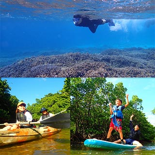 【Iriomote Island】【Popular】 SUP or Canoe Through a Mangrove and Snorkeling on Baras Island!【Free Photo Data】