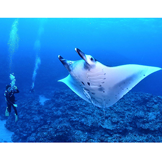 ★For the first time in Ishigaki Island!【All non-smoking】2 Times Diving in an Exhilarating Resort Cruiser!!