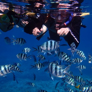 【Departure from Naha】Snorkeling at Kerama islands + one marine sport!