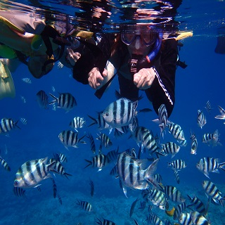 【Half day tour】 Board the speedboat from Naha Port to snorkel at Okinawa's best spots!