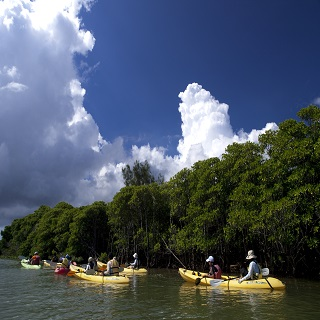 Mangrove Exploration Kayak Tour to the Kinkocho Okukubi River and experience nature at your own pace!