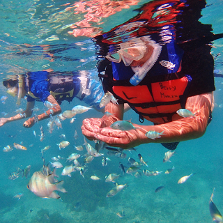 Snorkeling in Okinawa, including Tropical Fish Feeding experience!
