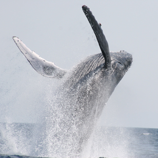 Northern Departure Whale Watching Tour + Churaumi Aquarium ticket