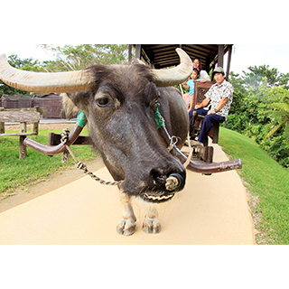 【Bios Hill】Affordable set: admission ticket + water buffalo cart ride + canoeing plan
