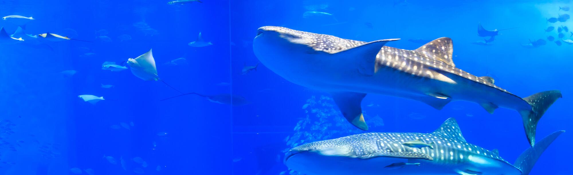 오키나와 관광